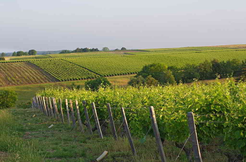 Vineyards of the Loire Valley