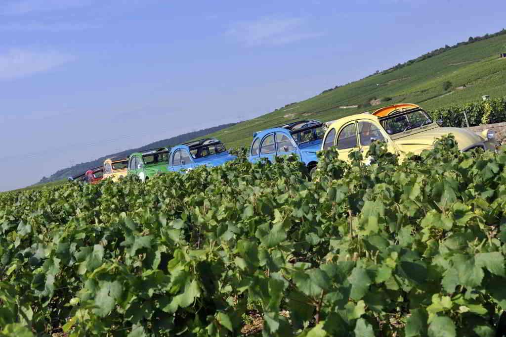 Breathtaking Wine Regions