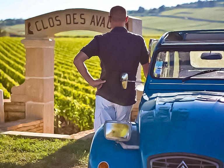 wine lover 2cv vineyards