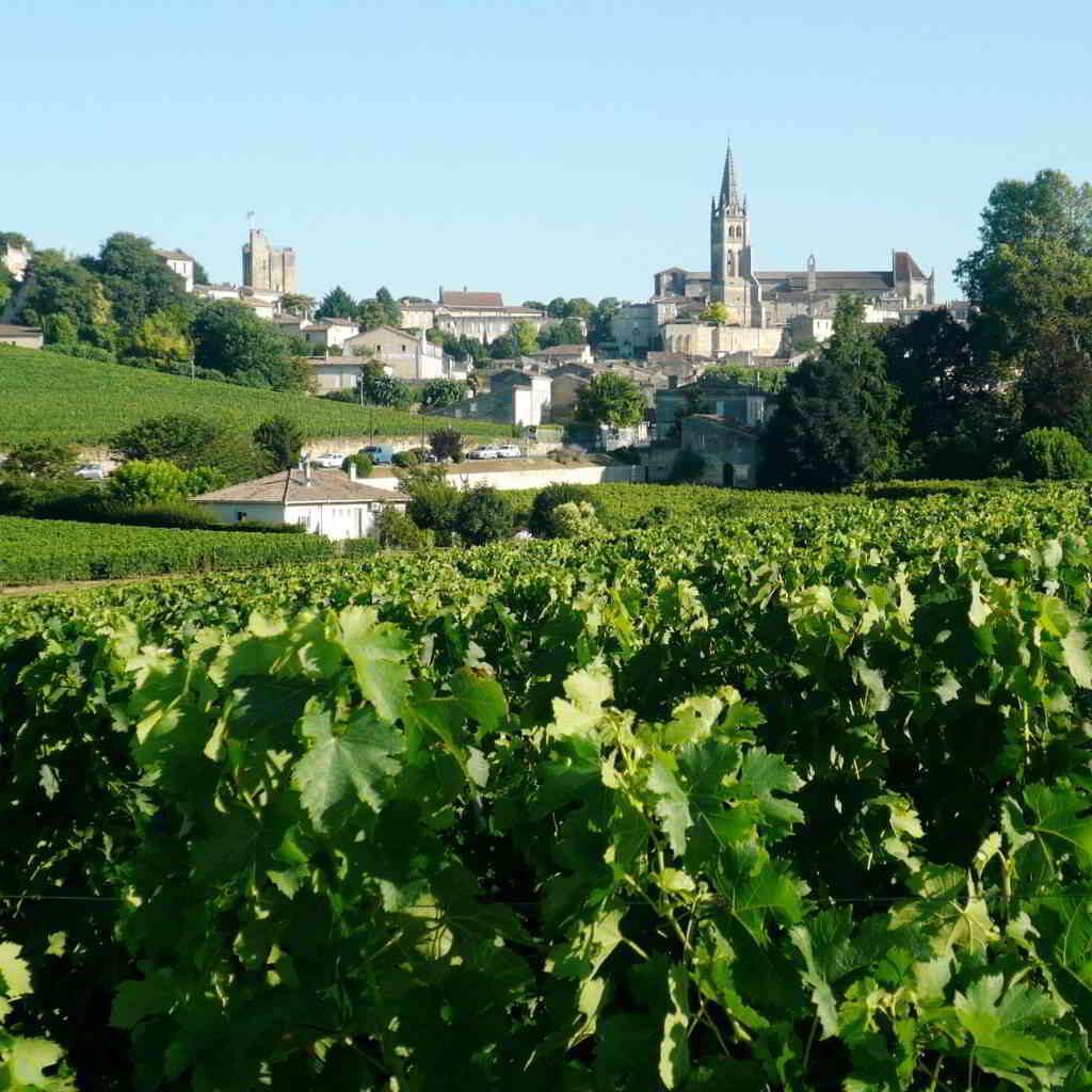 Saint Emilion - vineyards