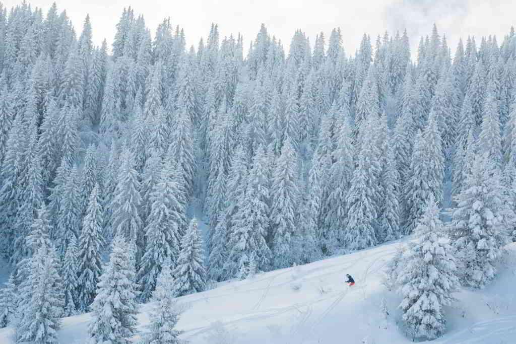 sapins neige megeve alpes