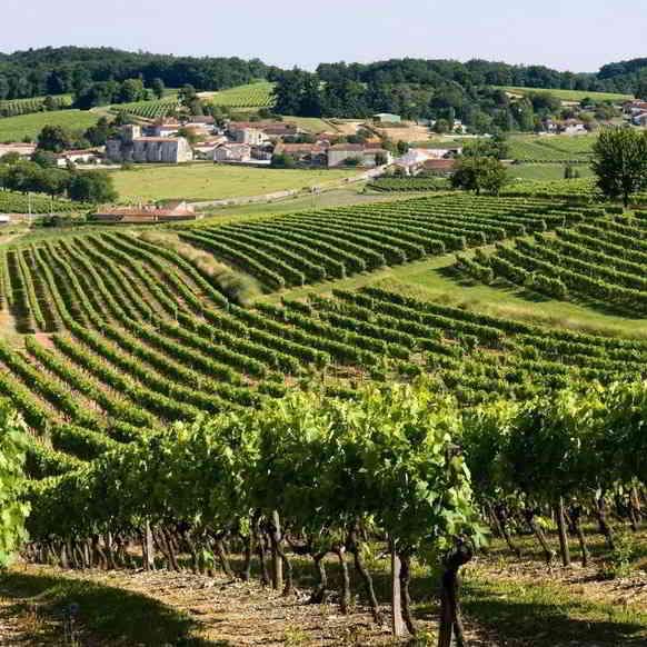 Cognac vineyards ©Le Parisien