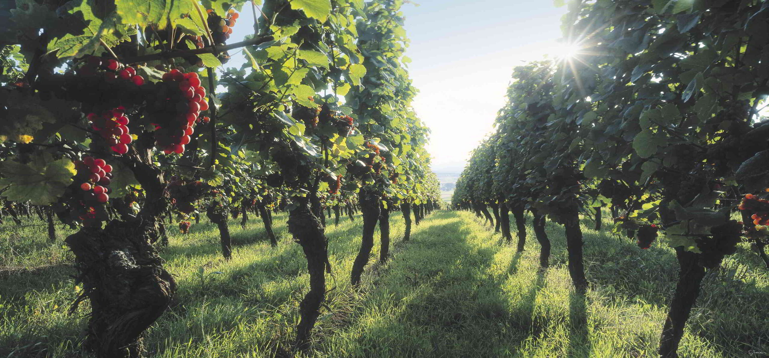 Exploring The Alsace Wine Route: 4 Key Wine Tasting Tips