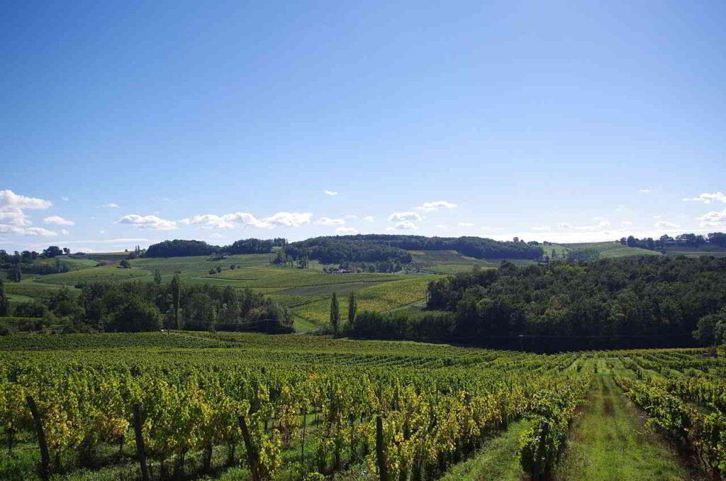 montravel vinery nature france wine