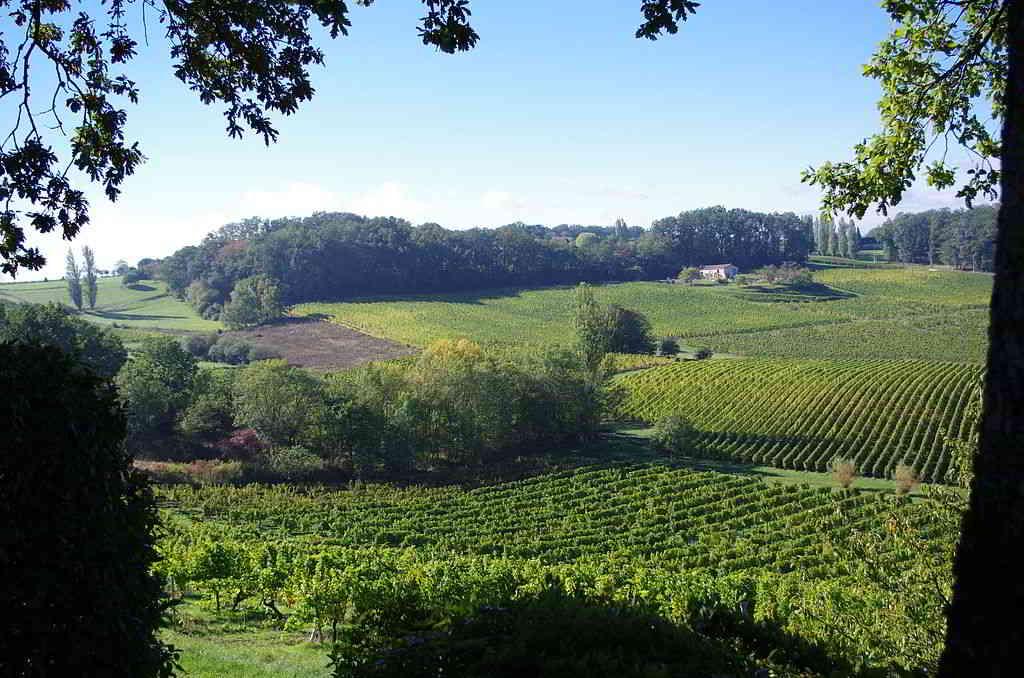 Saussignac vinery france