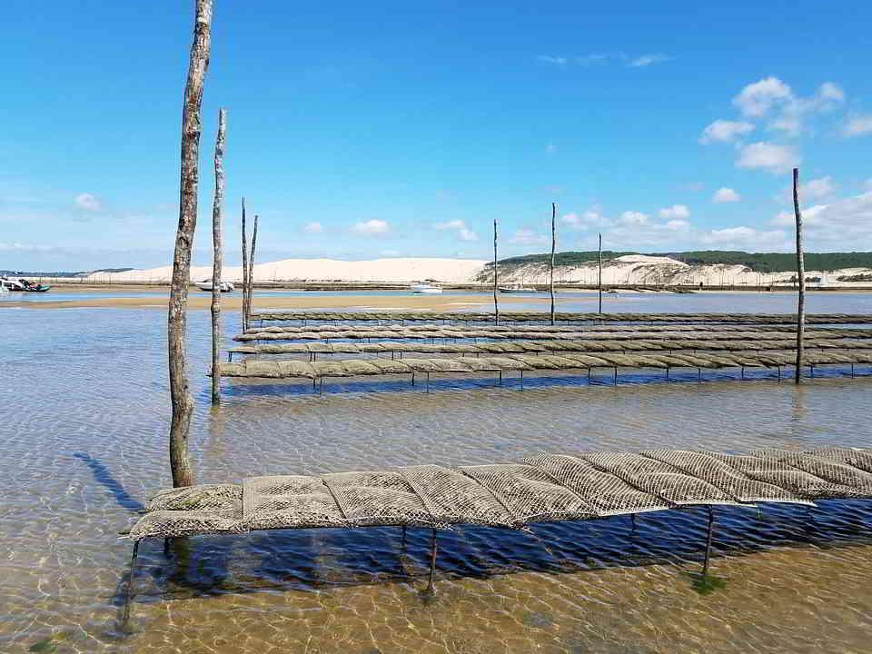Oyster-farming in Arcachon