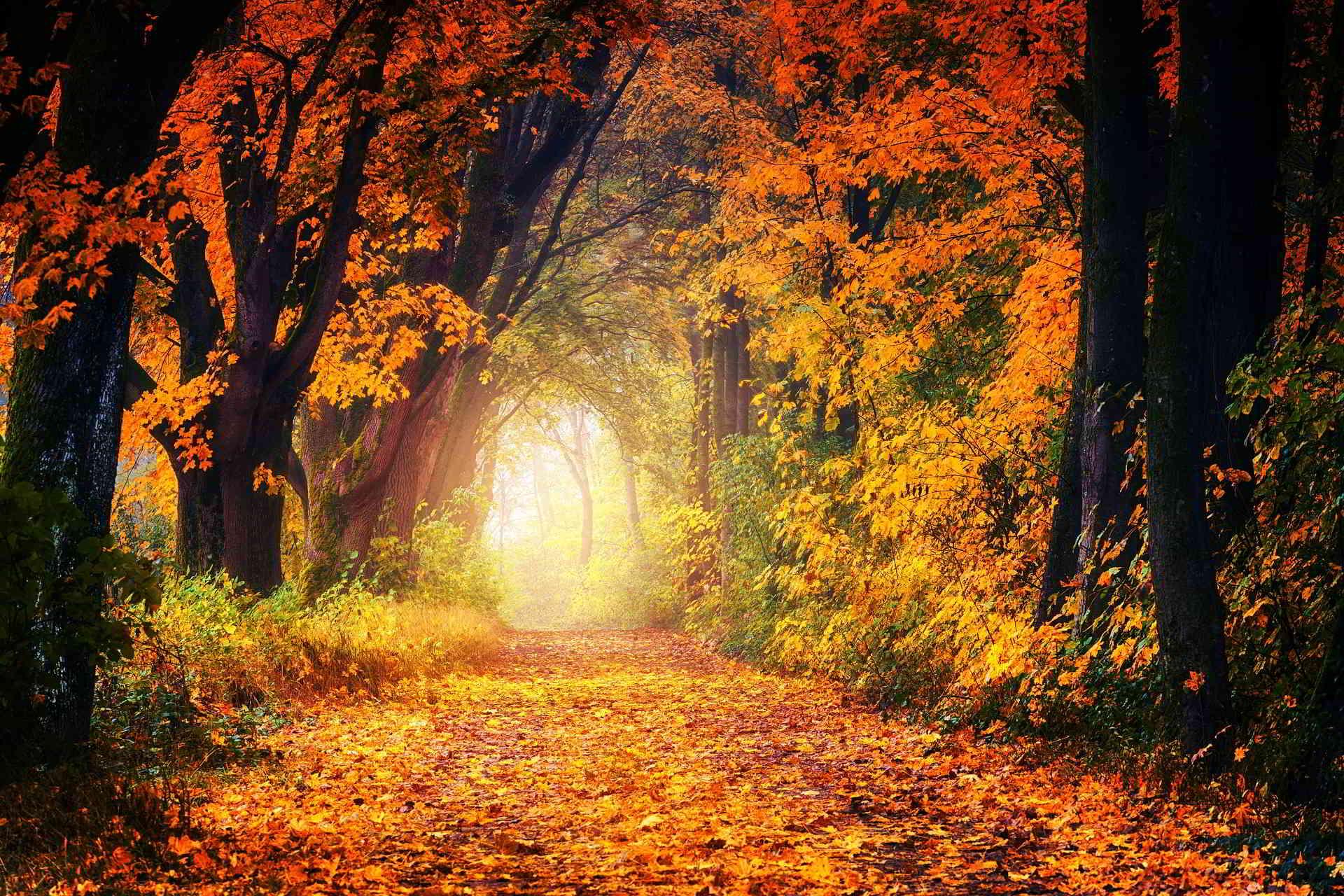 Autumn in France: Luxurious Ways to Enjoy It