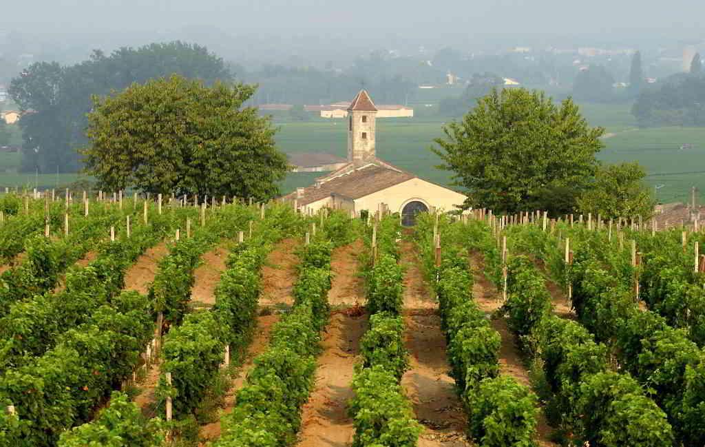 Bordeaux vines Saint-Emilion