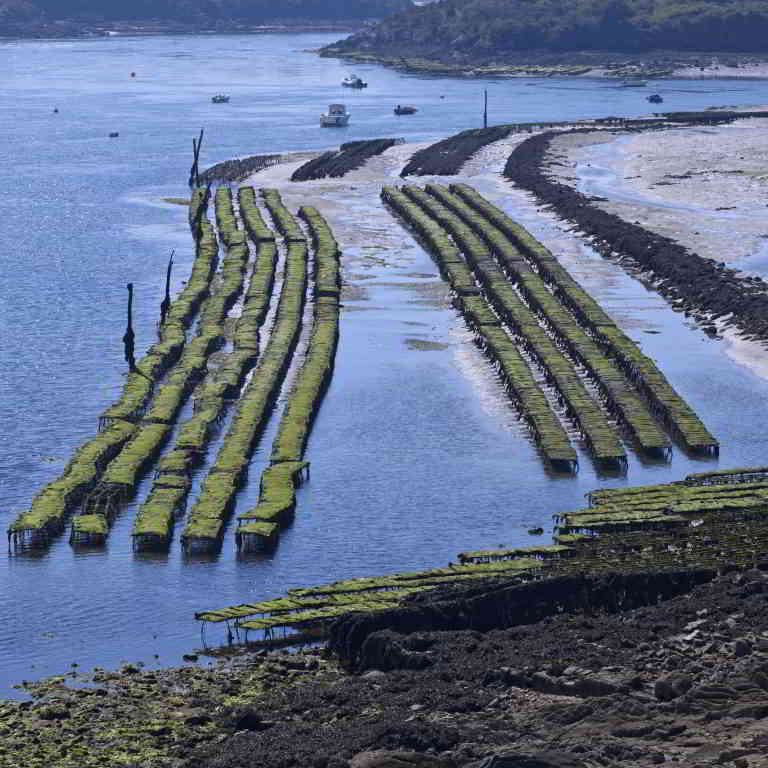 Oyster farms in Brittany @crtb