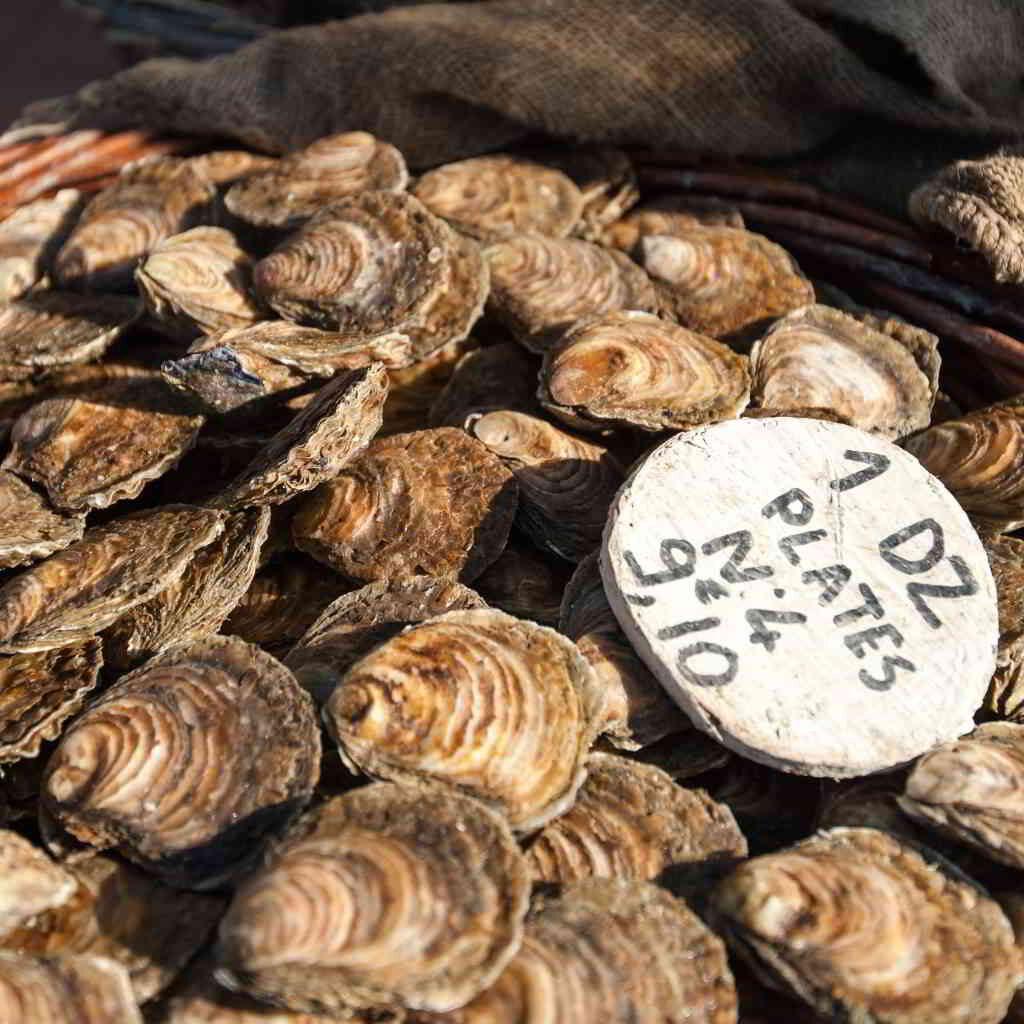 Famous Normandy oysters © Bertier Emmanuel
