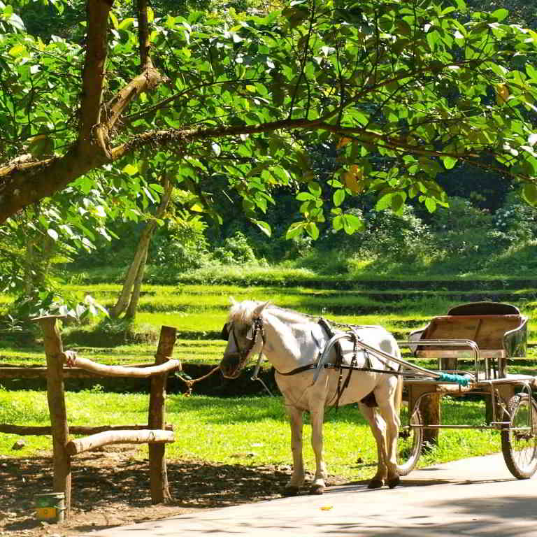 Romantic horse riding in Provence