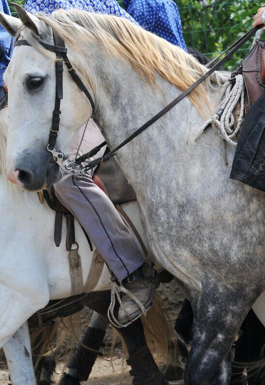 camargue promenade en chevaux avec un guide