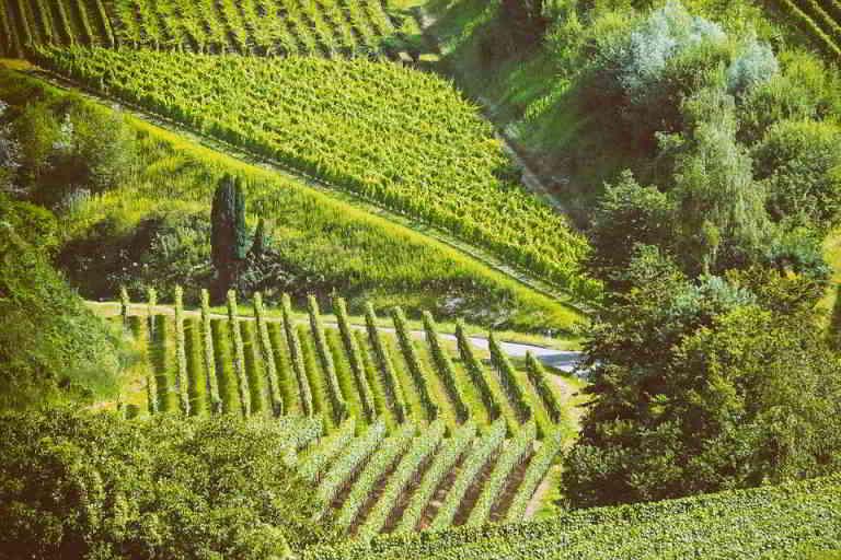 Côtes du Rhône vineyards