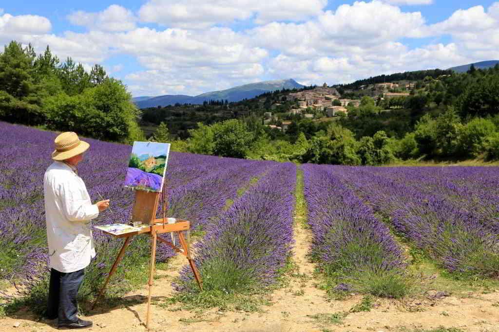 Artist on a Lavender fields © hocquel alain vaucluse provence