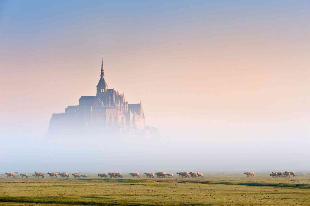 Sheeps in the mist of the mont Saint Michel is a site named heritage world heritage.