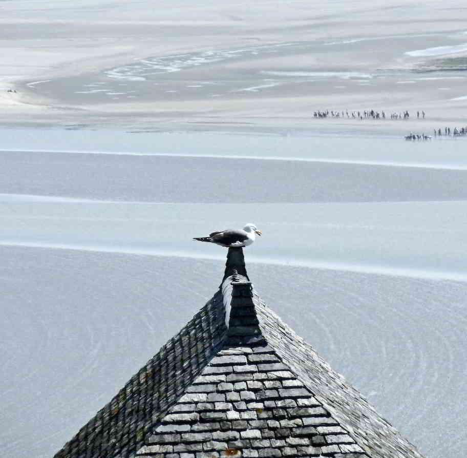 Sea Gull on top of Mont Saint-Michel