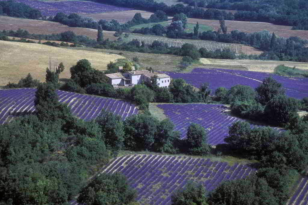 lavender fields sky view provence