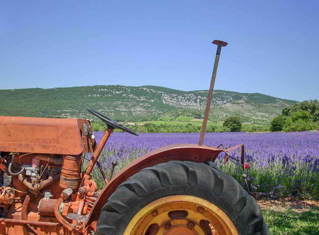 Lavender Distillerie and Museums