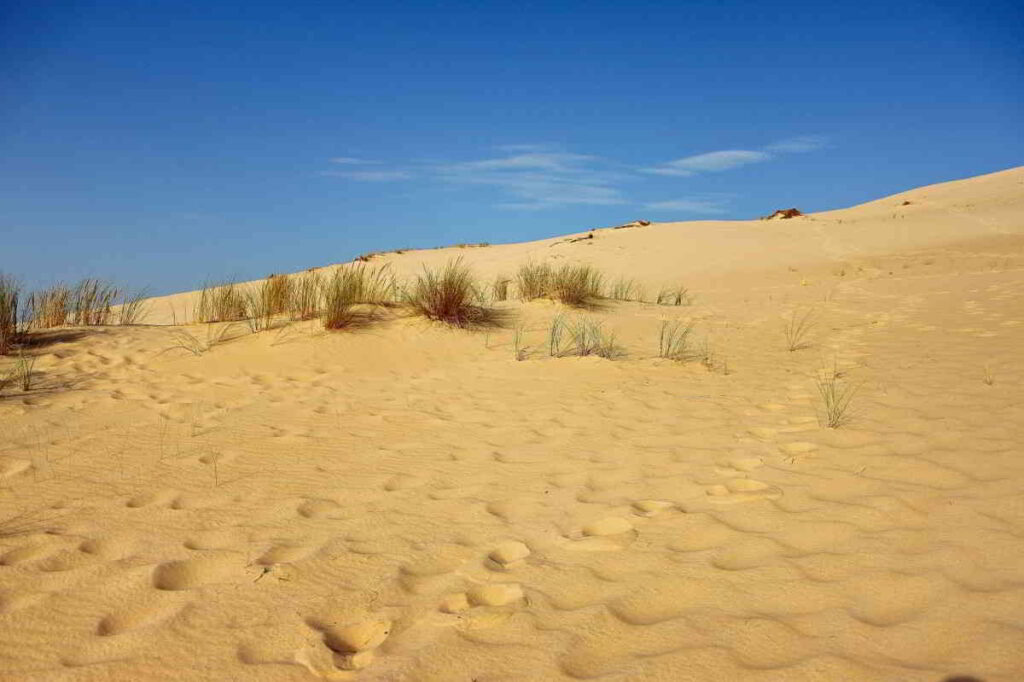 The Beautiful Dune du Pilat